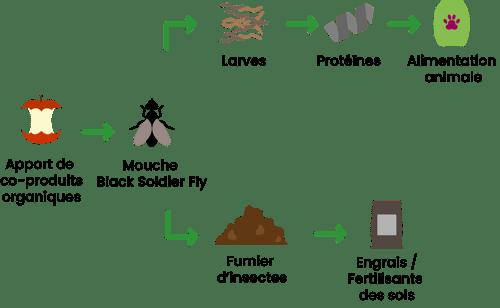 chaine de valeur insectes Dilepix