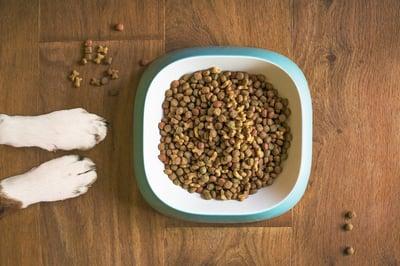 dog-food-alimentatin-insectes-Dilepix