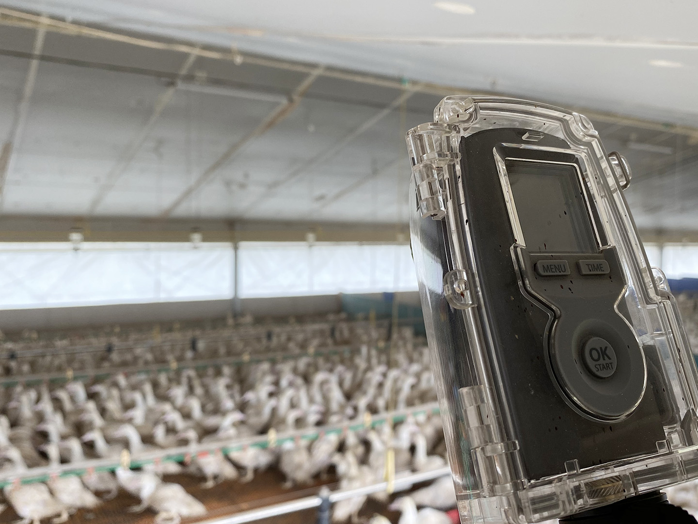 camera-surveillance-volaille