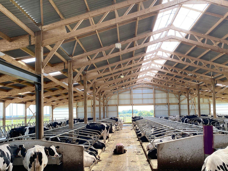la vision par ordinateur permet de s'assurer du bien-être des vaches