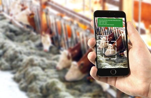 intelligence artificielle détection automatique élevage Dilepix Alban Pobla