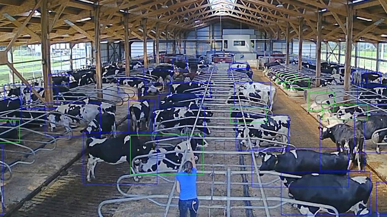 Apprentissage supervisé en agriculture : les caméras ne détectent QUE les animaux