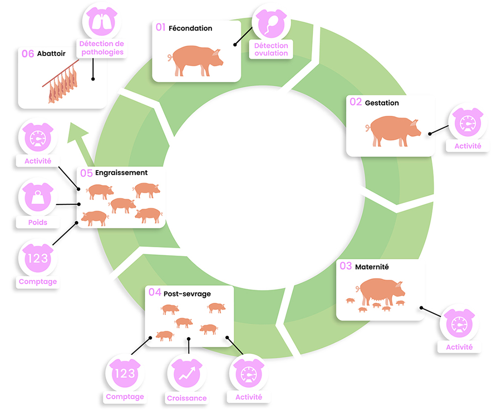 dilepix-schema-module-porc-FR