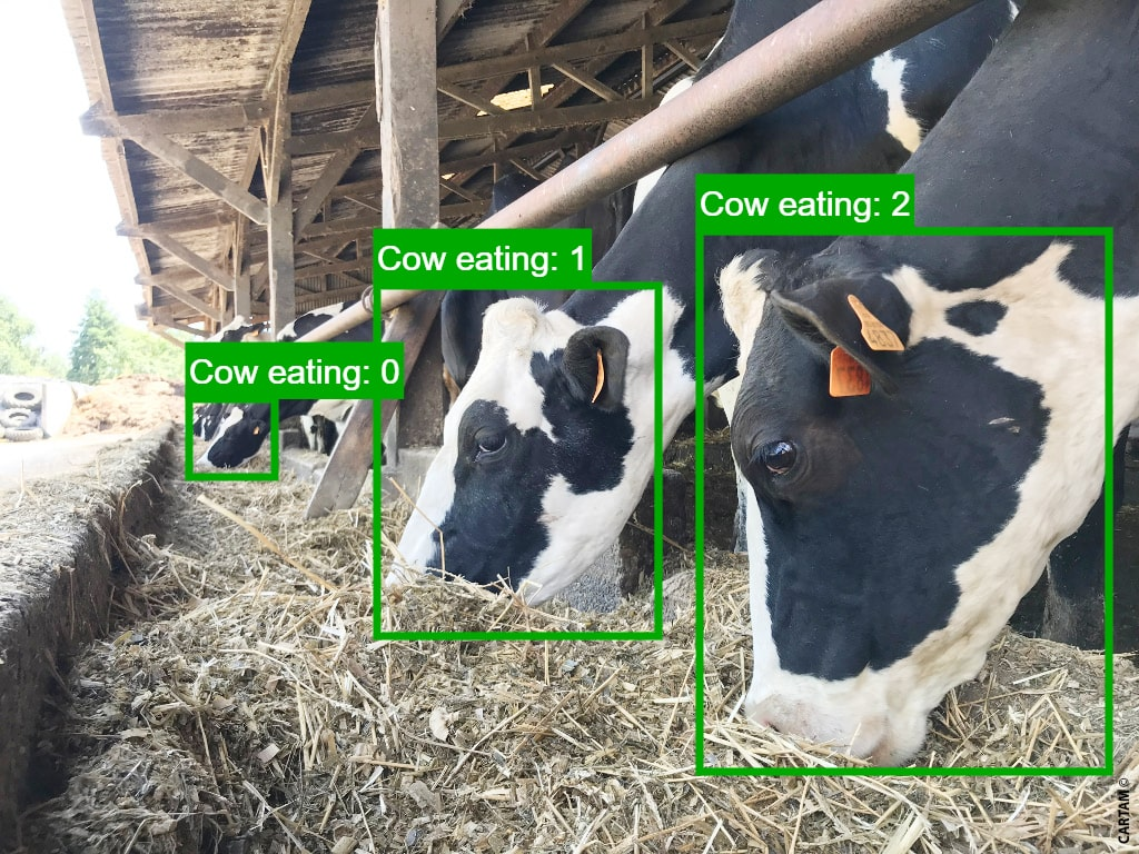 Dilepix cattle monitoring